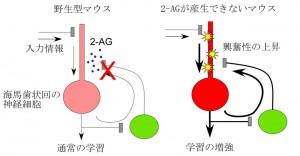 http___www.m.u-tokyo.ac