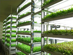 三菱化学,ツダコマ・ゼネラル・サービスに植物工場を販売
