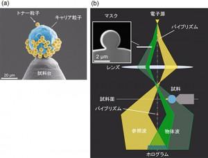 試料の走査電子顕微鏡(SEM)像と分離照射電子線ホログラフィーの模式図
