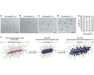 東大,光を照射した細胞に目的の遺伝子を導入するナノマシンを開発