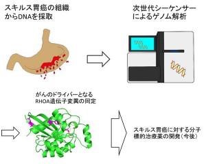 東京医科歯科大ら,難治性スキルス胃がんの治療標的候補となる活性化遺伝子変異の同定に成功