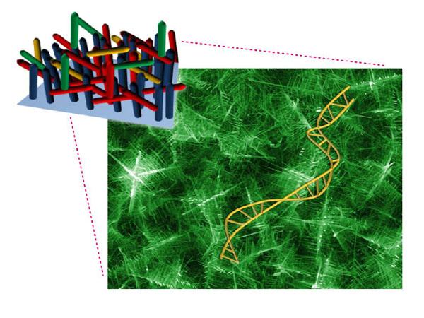 名大ら,ナノ構造で瞬時に遺伝子診断を実現する技術を開発