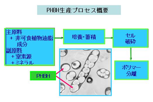 カネカ,植物由来の生分解性樹脂製造技術の開発に成功