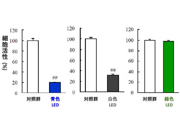 岐阜薬科大,LEDのブルーライトが目に影響を及ぼすメカニズムを解明