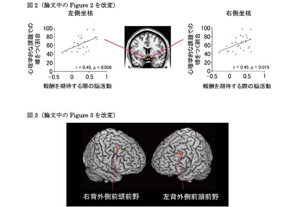 京大,fMRIを用いて「嘘つき」と「正直者」の脳の活動の違いを解明