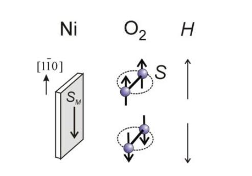 NIMS,表面酸化反応への酸素分子スピンの影響を初めて観測