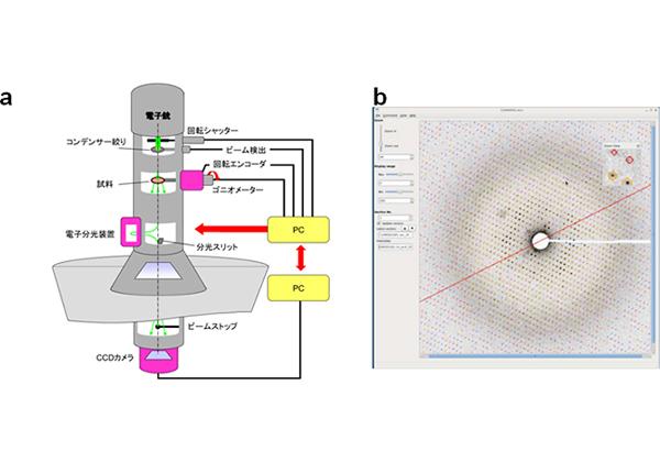 理研ら,微小で薄いタンパク質結晶の電子線構造解析に成功