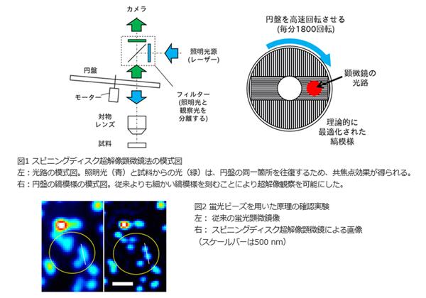 オリンパスら,細胞内微細構造の高速観察法を開発