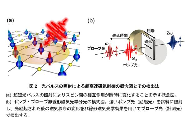 東北大,光パルスで磁気秩序の超高速制御に成功