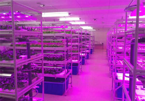 キーストーンテクノロジー,障がい者就労支援施設に植物工場を納入