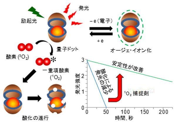 産総研,量子ドットの発光が安定化するメカニズムを解明