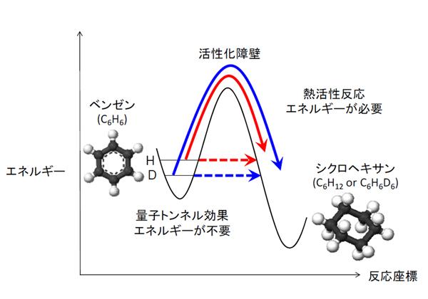 北大,水素同位体効果が観測されない量子トンネル効果を発見