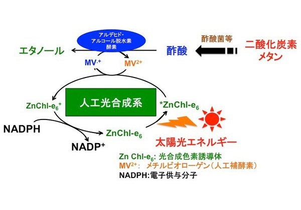 大阪市立大ら,エタノールを生成する人工光合成を考案