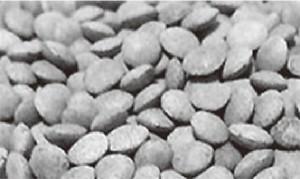図1 レンズ豆