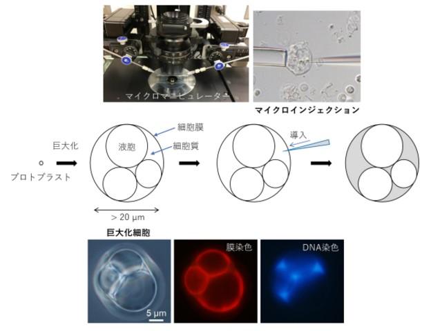 富山県立大,バクテリアにチップを挿入