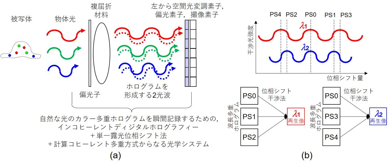 図1 自然な光を用いる瞬間カラー多重ディジタルホログラフィーの概略。
