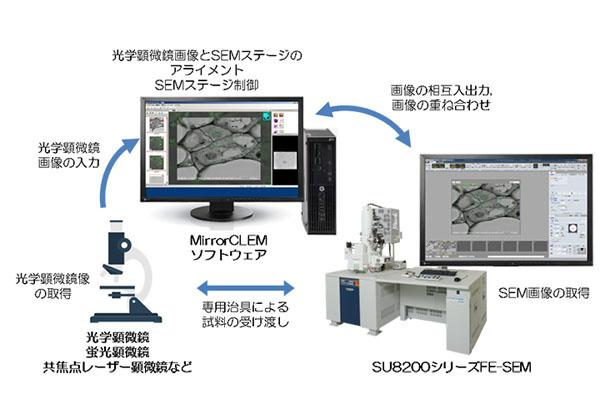 日立ハイテクら,光-電子相関顕微鏡法用システムを開発