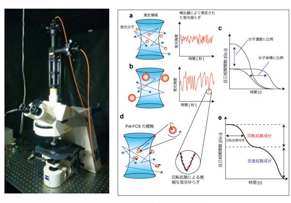 北大,光学顕微鏡で細胞内タンパク質の回転を計測