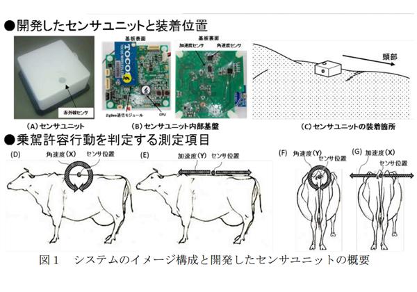 農研機構,赤外線センサーで牛の発情を検出