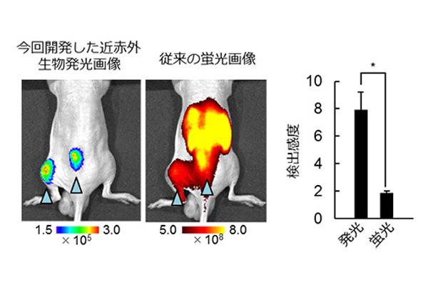 東工大,悪性腫瘍を非侵襲で可視化するプローブを開発