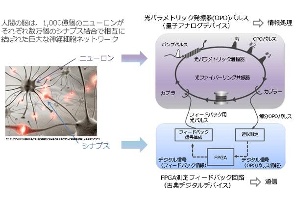 NTTら,光で量子ニューラルネットワークを実現