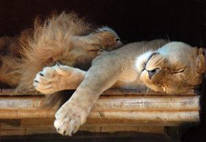 眠気対策について