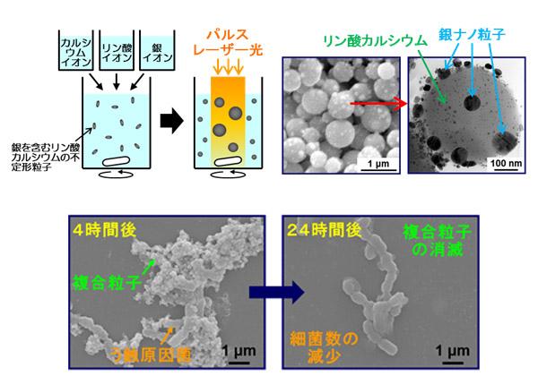 産総研ら,パルスレーザーで歯科材料ナノ粒子を作製