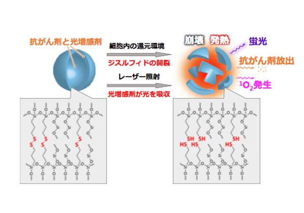 名大,光でがんを破壊するナノ粒子を開発