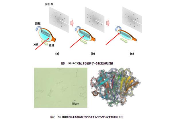 理研ら,放射光でタンパク質微小結晶の構造を効率的に決定