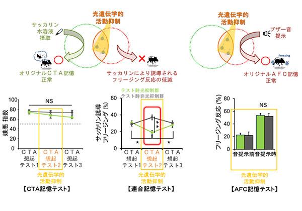 富山大,記憶と神経細胞集団の仕組みを光遺伝学で解明