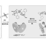 東大,光と熱で制御するギア分子を開発の画像
