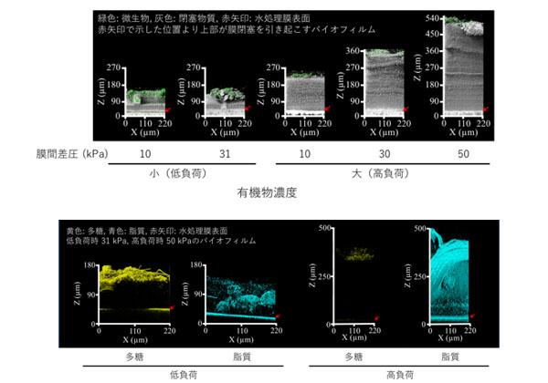 産総研,水処理膜の閉塞を共焦点顕微鏡で可視化