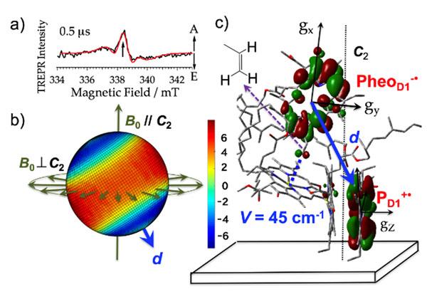神大ら,光合成の効率的な電荷生成を解明