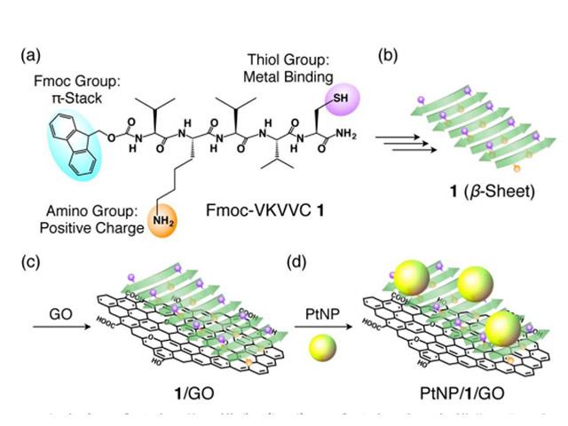 筑波大,生体分子とナノ粒子による人工光合成に成功