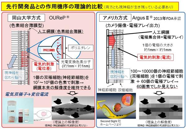 岡山大,人工網膜の治験に向けて有効性を証明