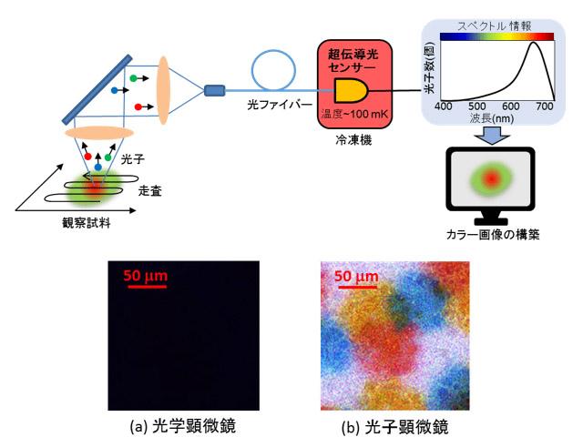 産総研,光子一つが見える顕微鏡を開発