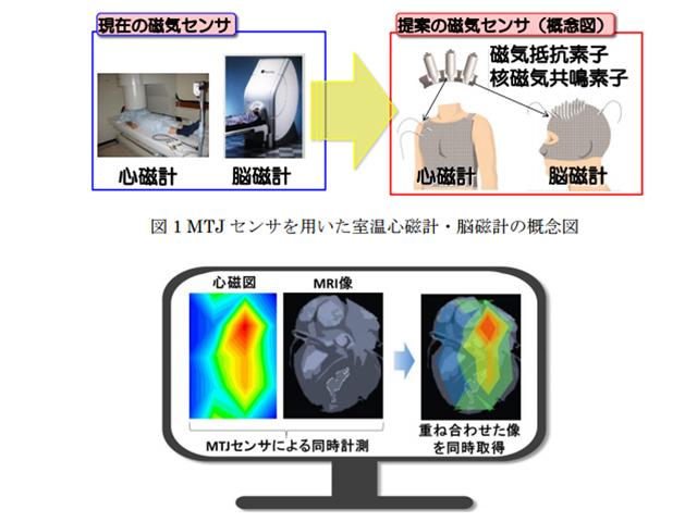 東北大,室温動作の生体磁場センサーを高出力化