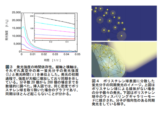 府大,新光源に寄与する同期現象の理論を構築