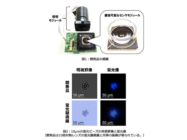 東芝,センサー上で細胞の蛍光観察に成功