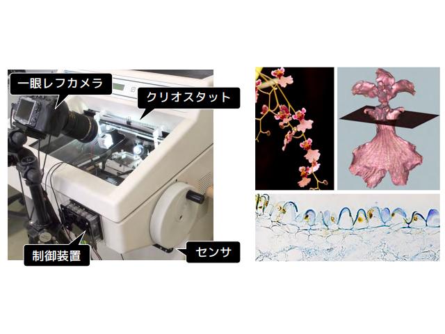 群大,2D顕微鏡画像と3D形態画像を両方取得する手法を開発
