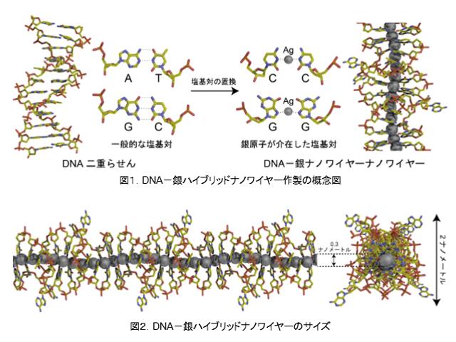 上智大,直径0.3㎚の銀ナノワイヤーの作成に成功