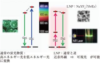 近赤外光を可視光に変換できるLNP 出所:JST
