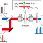 SRS顕微鏡のイメージング速度を高速化!動く微生物の個性を測る手法の開発に成功の画像