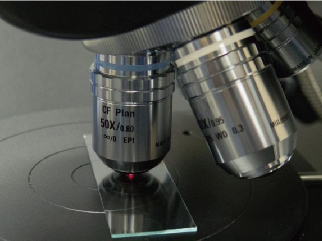非線形光学顕微鏡を用いてラベルフリーによる網膜内構造の可視化に成功