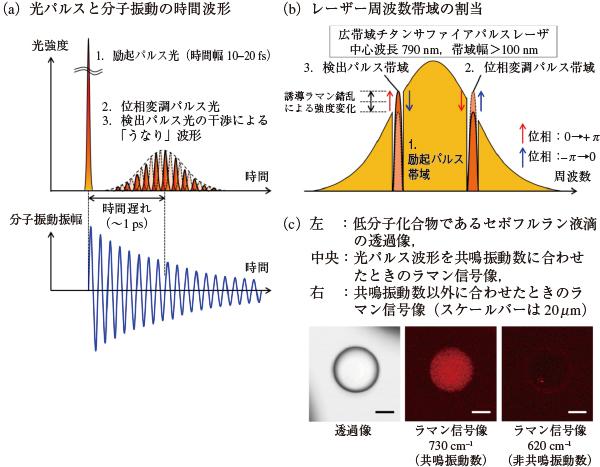 図2 開発したコヒーレントラマン顕微鏡システムの模式図と撮像例