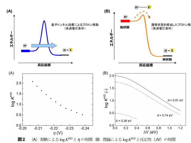 NIMSら,電気化学的プロトン移動における量子-古典転移を確認
