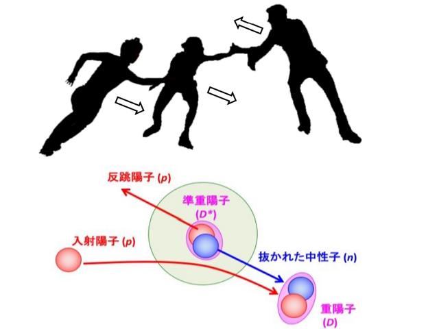 阪大,原子核内で相互作用する陽子中性子対を観測
