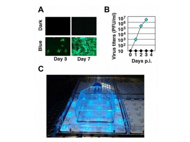 東大ら,青色光で制御するウイルスベクターを開発