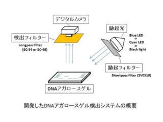 京産大,シアンLEDを使ったDNAシステムを開発