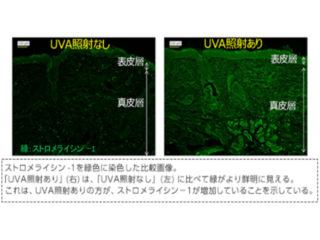 富士フイルム,微量紫外線の肌乾燥の仕組み解明